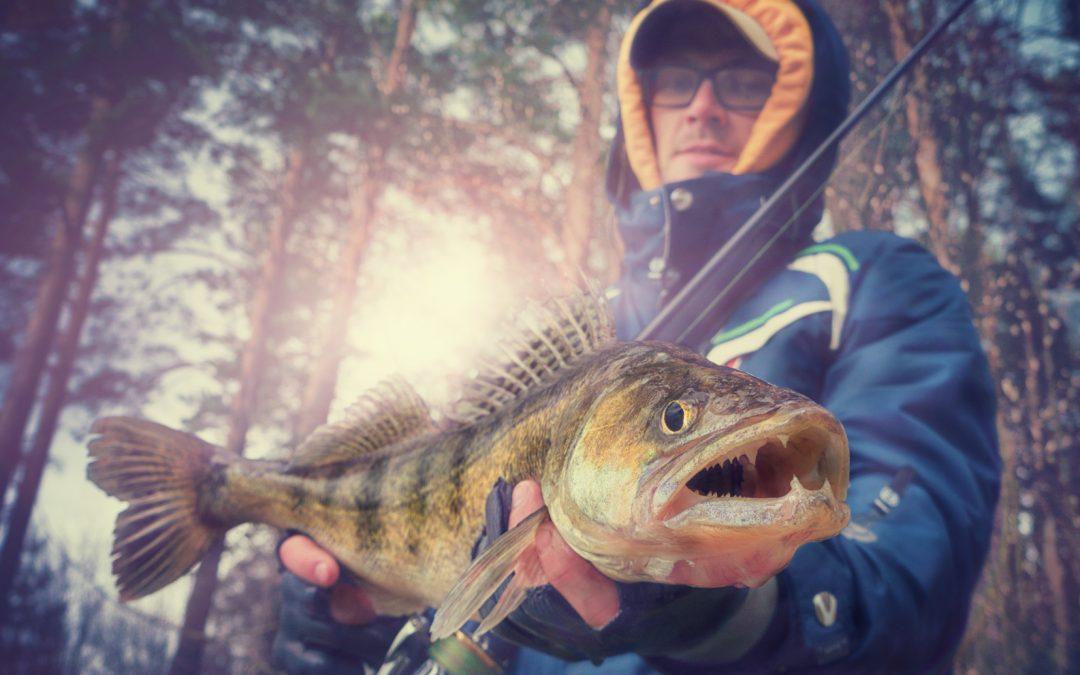 Zander angeln – Tipps und Tricks