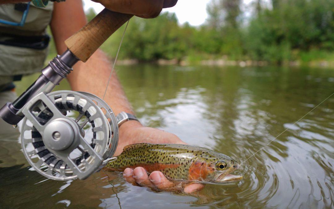 Fliegenfischen für Anfänger – mit Profi-Tipps