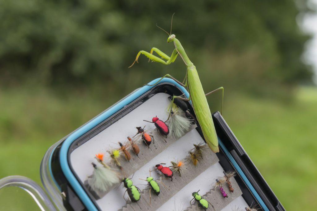 Trockenfliegen Käfer