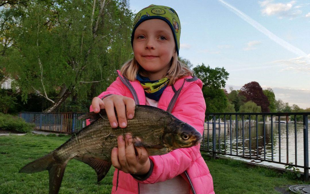 Brassen angeln – Ködertipps und Angeltechnik