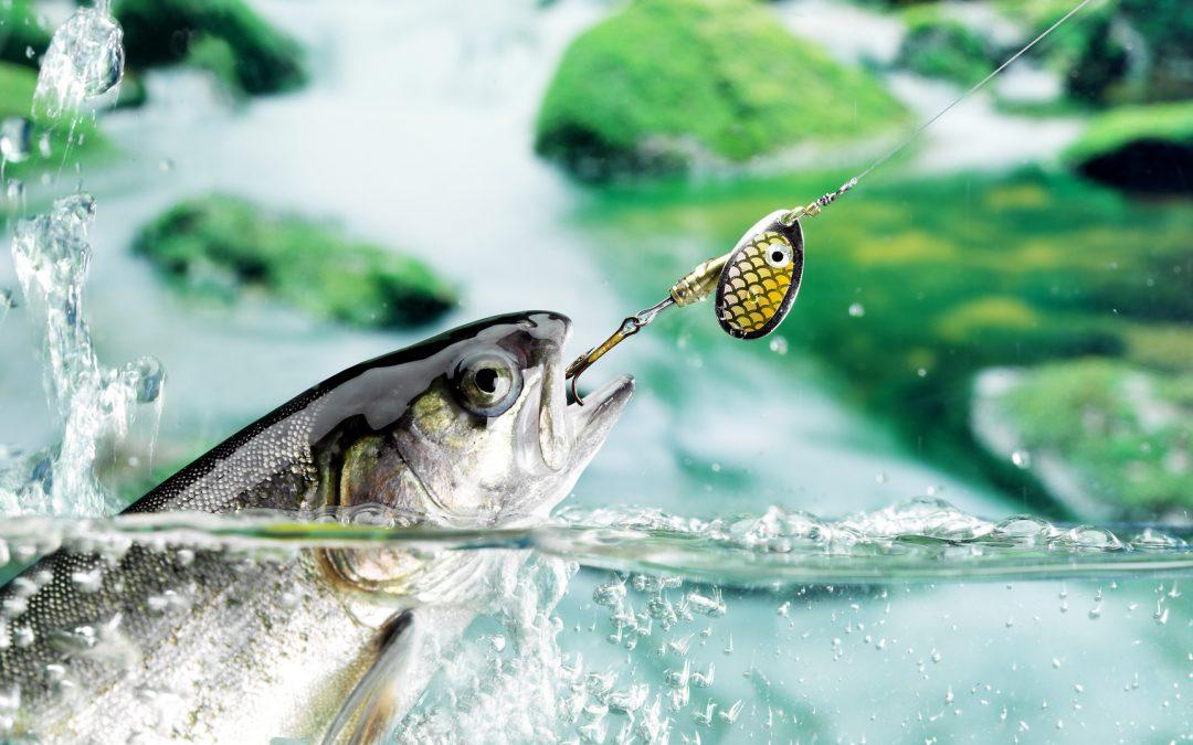 Spinnfischen für Anfänger – Technik und Montage