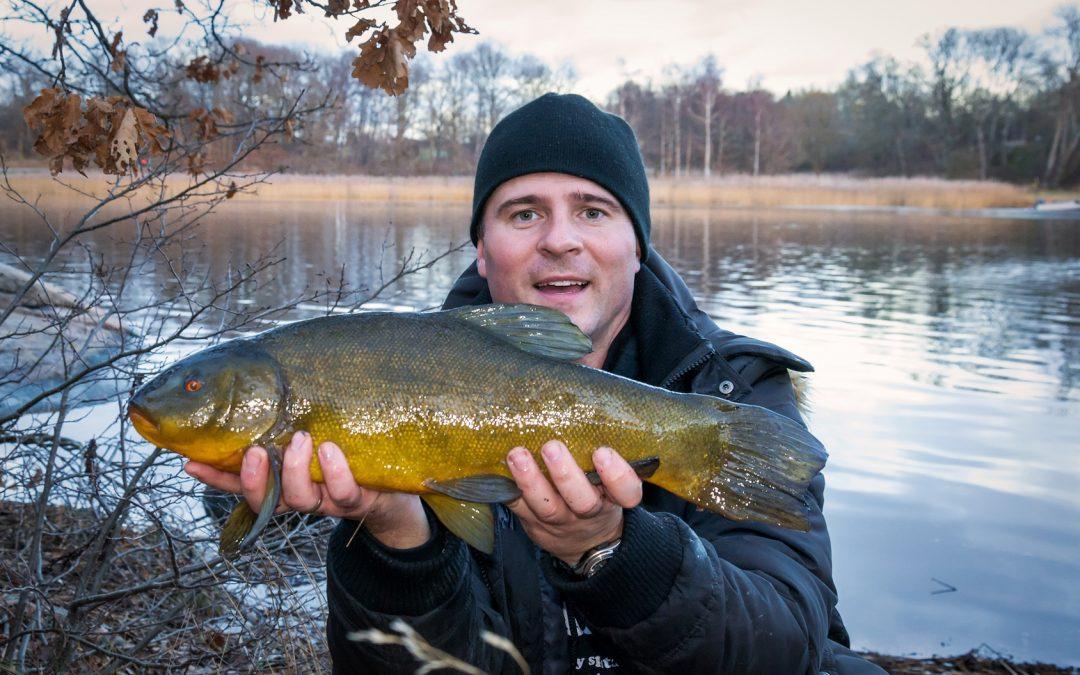 Schleien angeln – Montage, Tipps und Köder