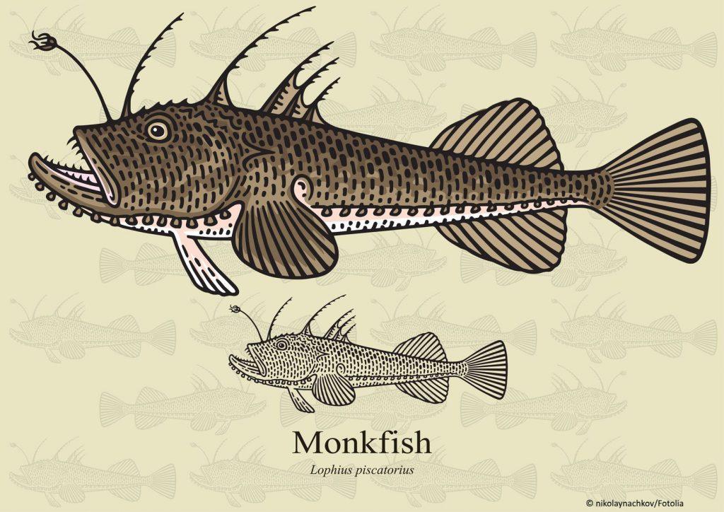 Monkfisch Illustration