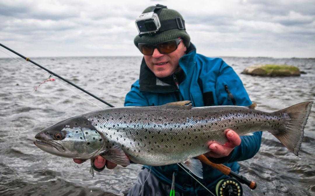Meerforelle angeln – mit Tipps für mehr Erfolg
