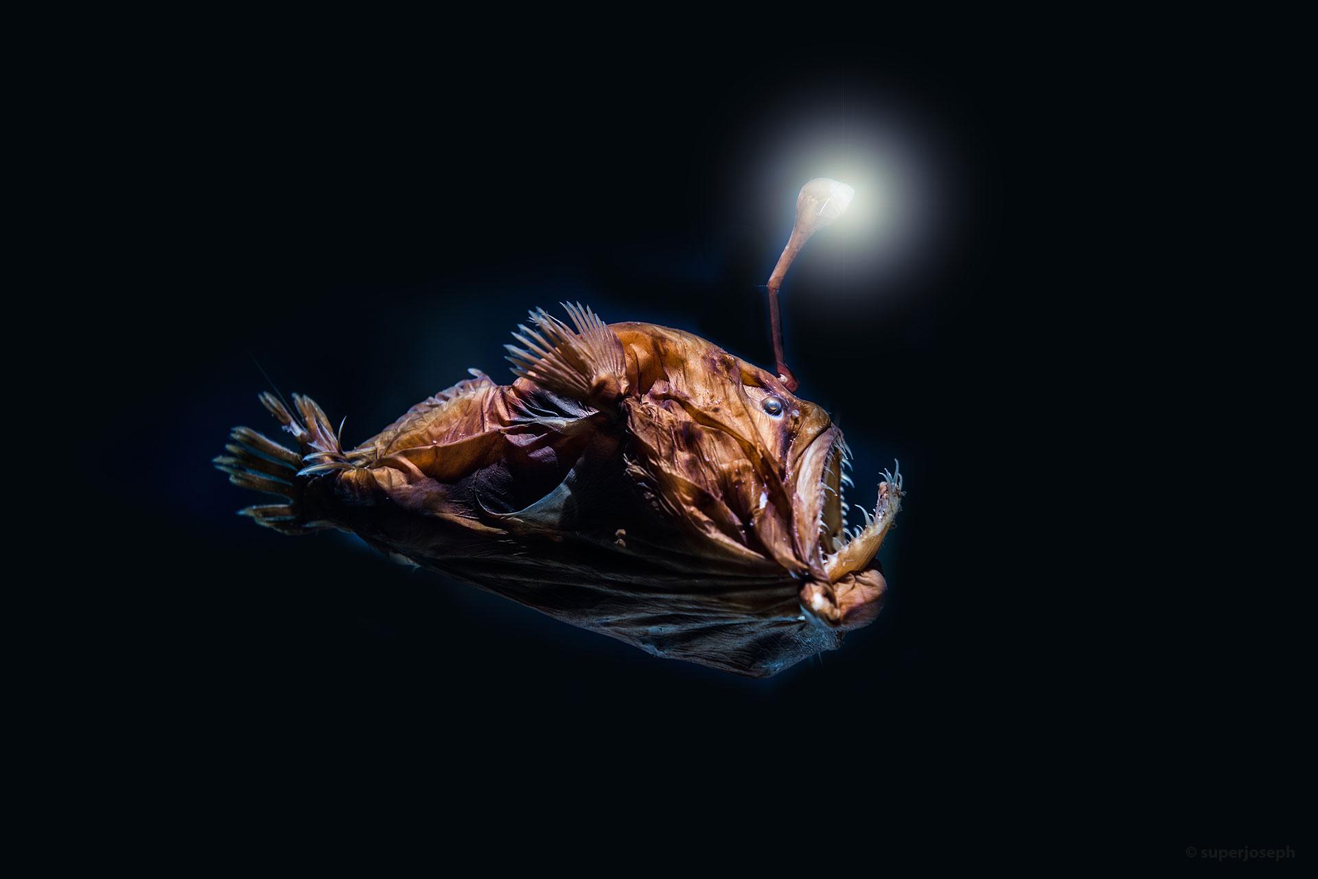 Tiefsee Anglerfisch